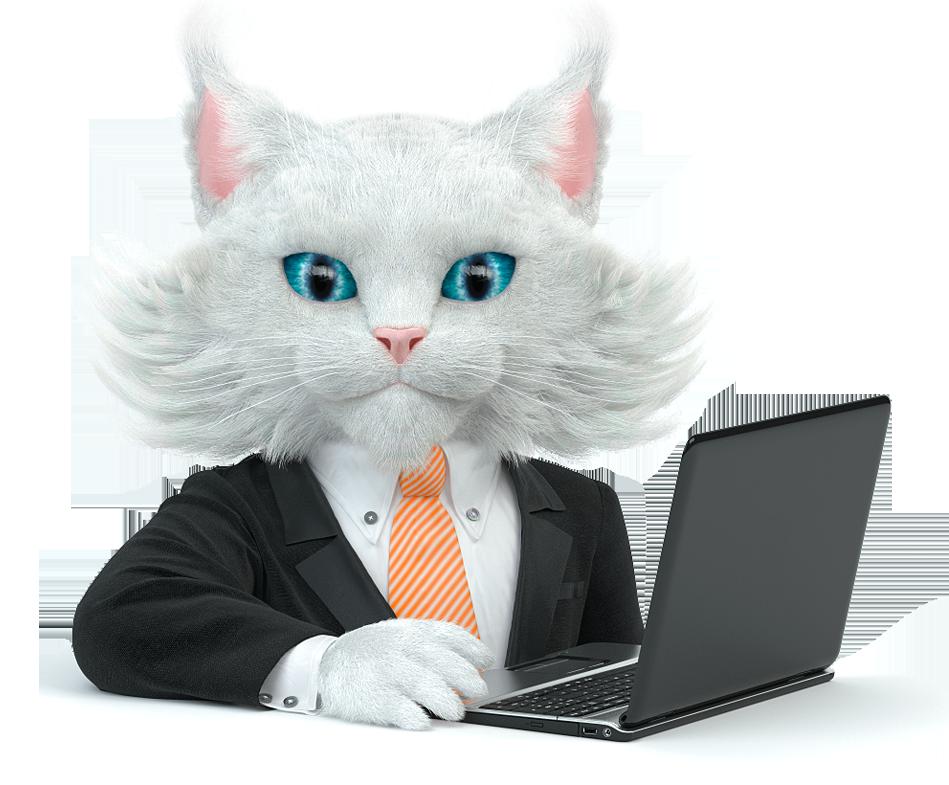 Агентство белый кот отзывы